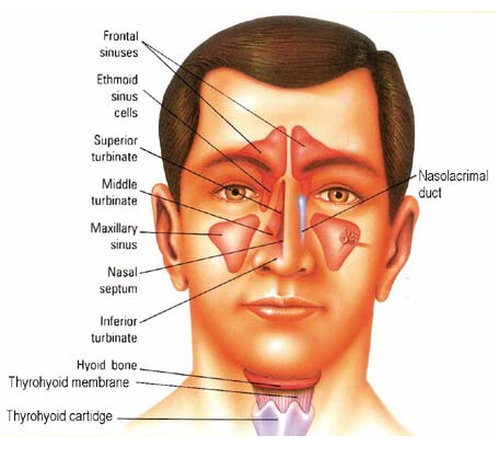 Endoscopic Sinus Surgery to Remove a Hamartoma Tumor- Home page